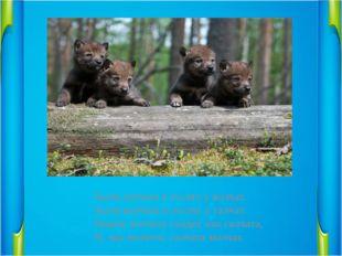 Были галчата в гостях у волчат.                       Были волчата в гостях у