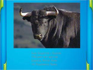 Бык бодается с быком.                 Убегают все кругом.