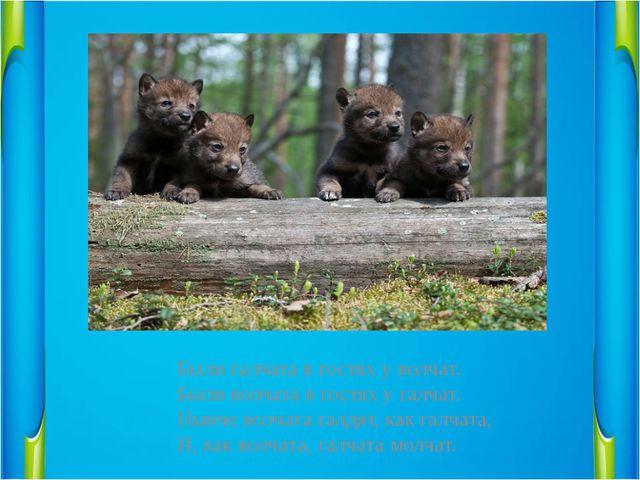 Были галчата в гостях у волчат.                       Были волчата в гостях у...