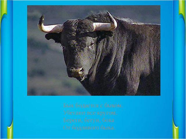 Бык бодается с быком.                 Убегают все кругом....