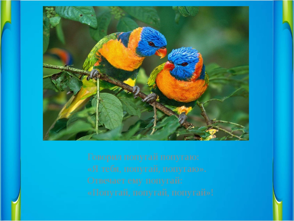 Говорил попугай попугаю:                  «Я тебя, попугай, попугаю»....
