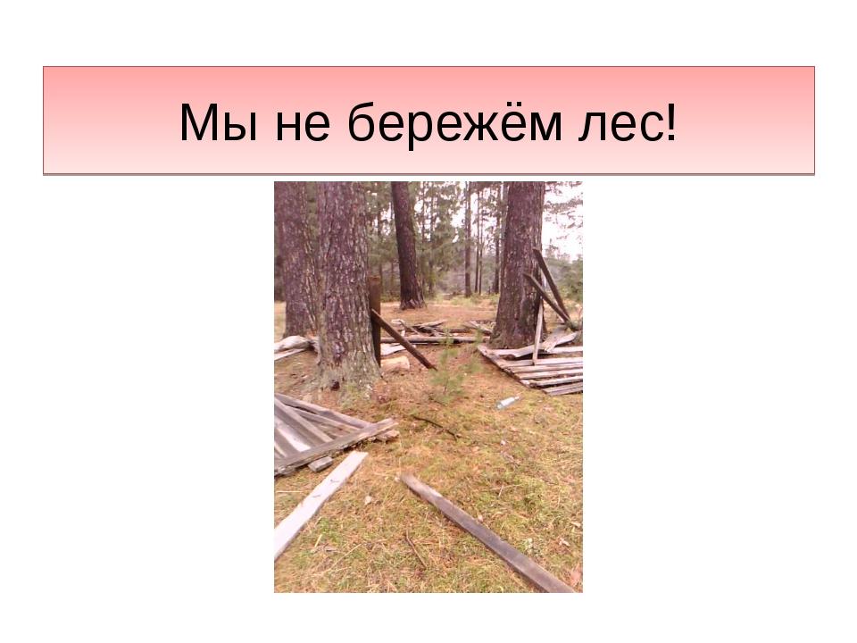 Мы не бережём лес!