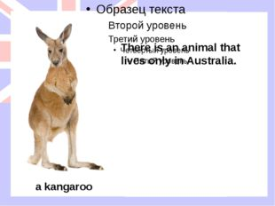There is an animal that lives only in Australia. a kangaroo There is an anima