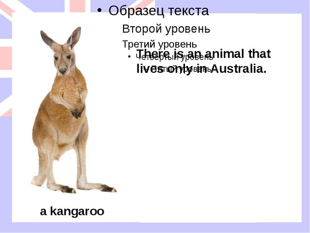 There is an animal that lives only in Australia. a kangaroo There is an anima...