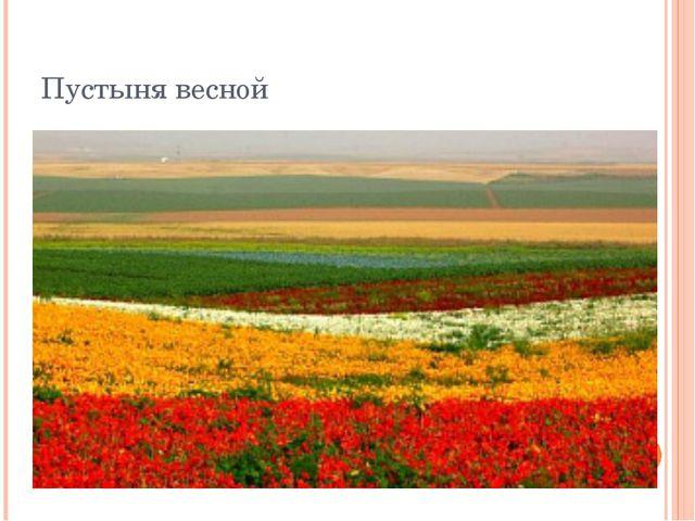 Пустыня весной