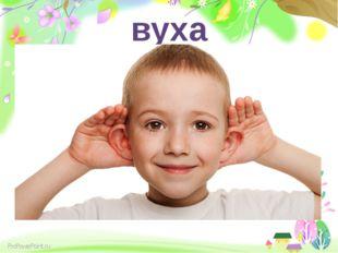 вуха ProPowerPoint.ru