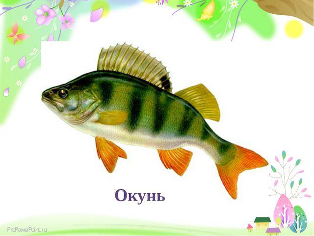 Дельфін,кіт, окунь Окунь ProPowerPoint.ru
