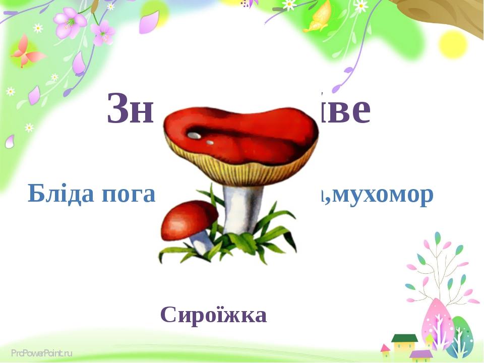 Знайди зайве Бліда поганка, сироїжка,мухомор Сироїжка ProPowerPoint.ru