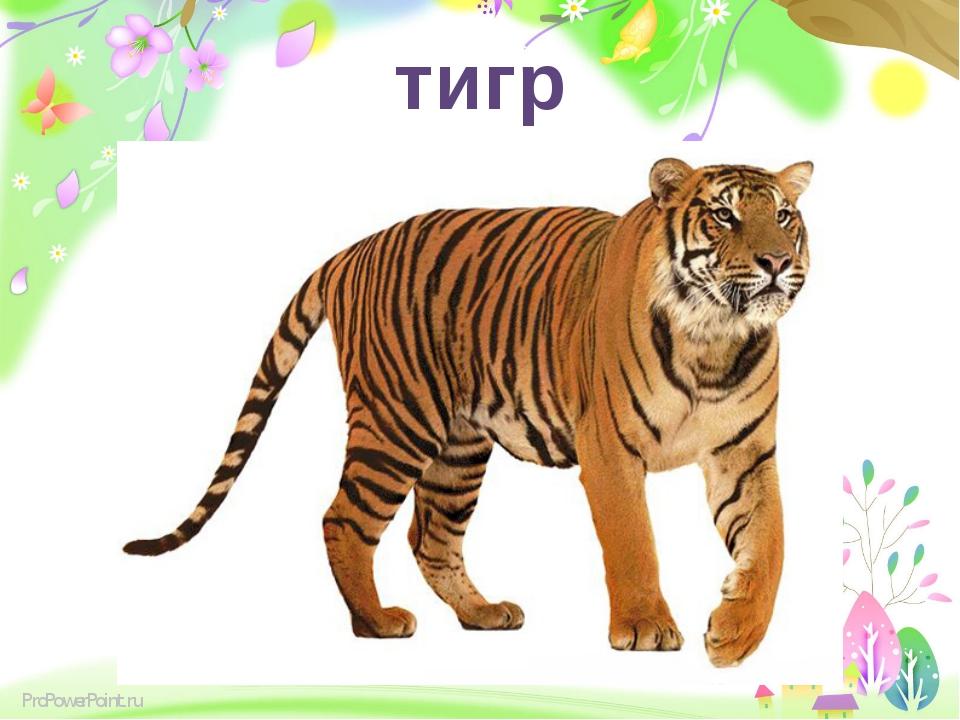 тигр ProPowerPoint.ru