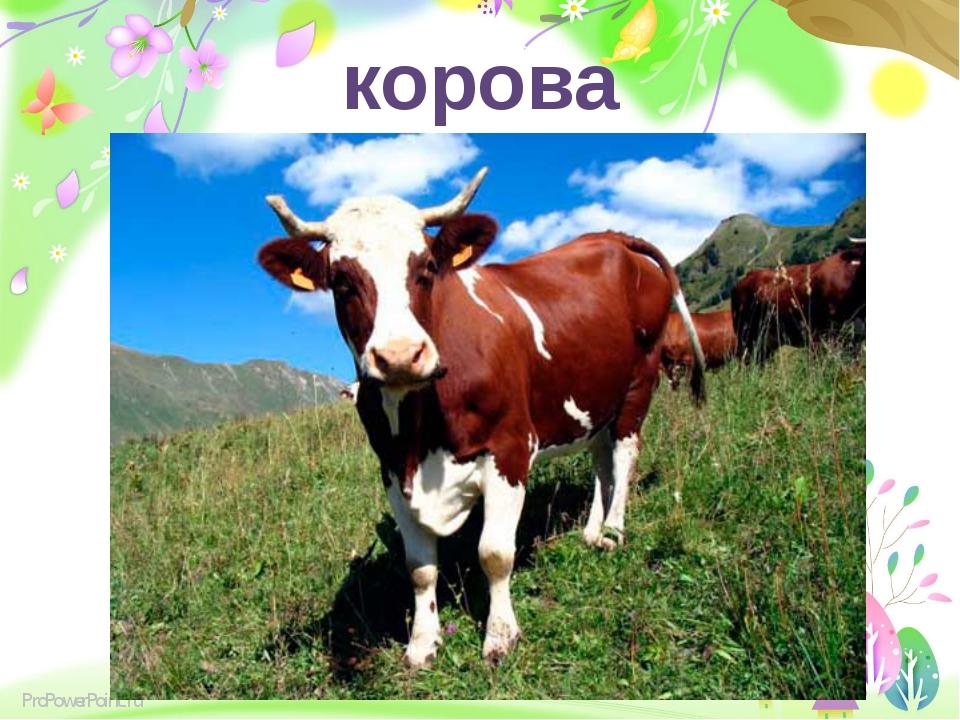 корова ProPowerPoint.ru