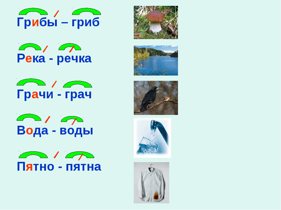 Грибы – гриб Река - речка Грачи - грач Вода - воды Пятно - пятна