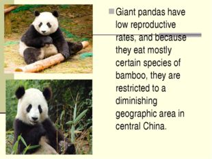 Giant pandas have low reproductive rates, and because they eat mostly certain