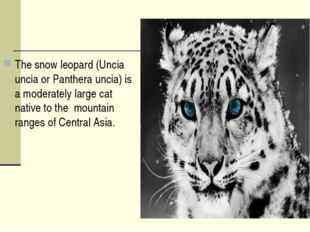 The snow leopard (Uncia uncia or Panthera uncia) is a moderately large cat na