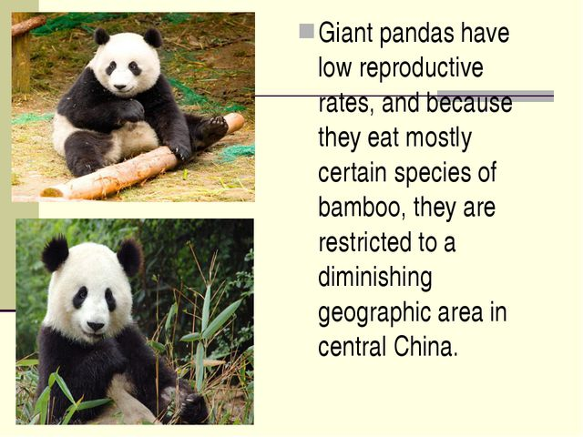 Giant pandas have low reproductive rates, and because they eat mostly certain...