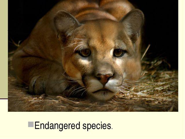 Endangered species.