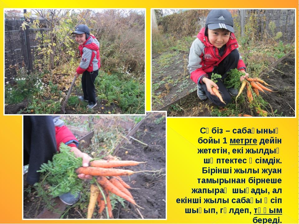 Сәбіз – сабағының бойы 1 метрге дейін жететін, екі жылдық шөптектес өсімдік....