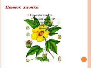 Цветок хлопка