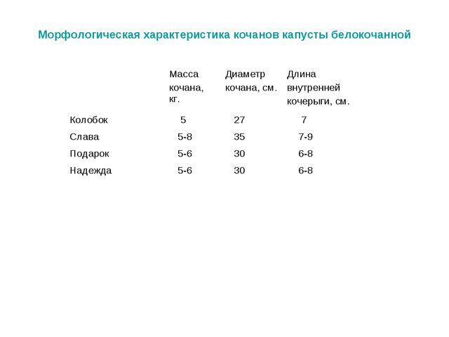 Морфологическая характеристика кочанов капусты белокочанной Масса кочана, кг...