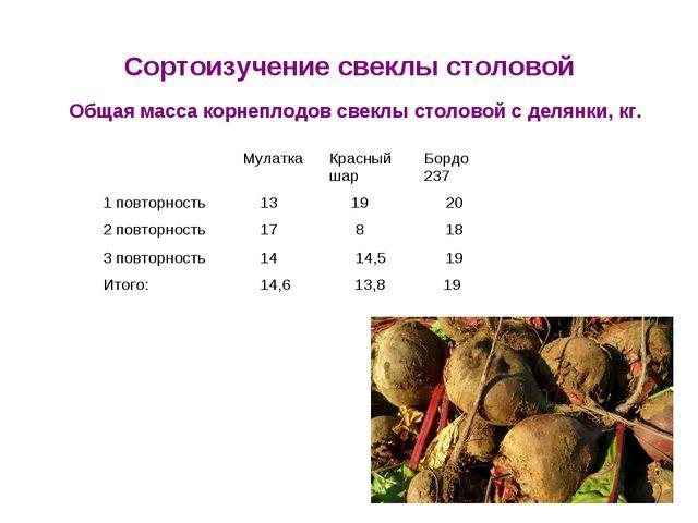 Сортоизучение свеклы столовой Общая масса корнеплодов свеклы столовой с делян...