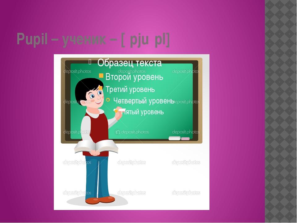 Pupil – ученик – [ˈpjuːpl]