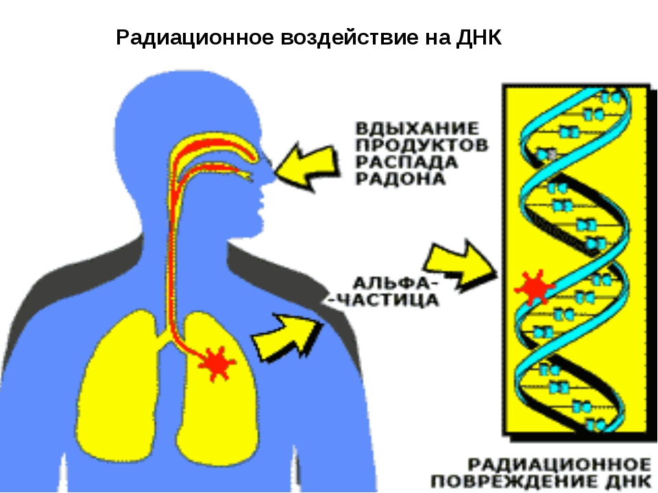 Радиационное воздействие на ДНК