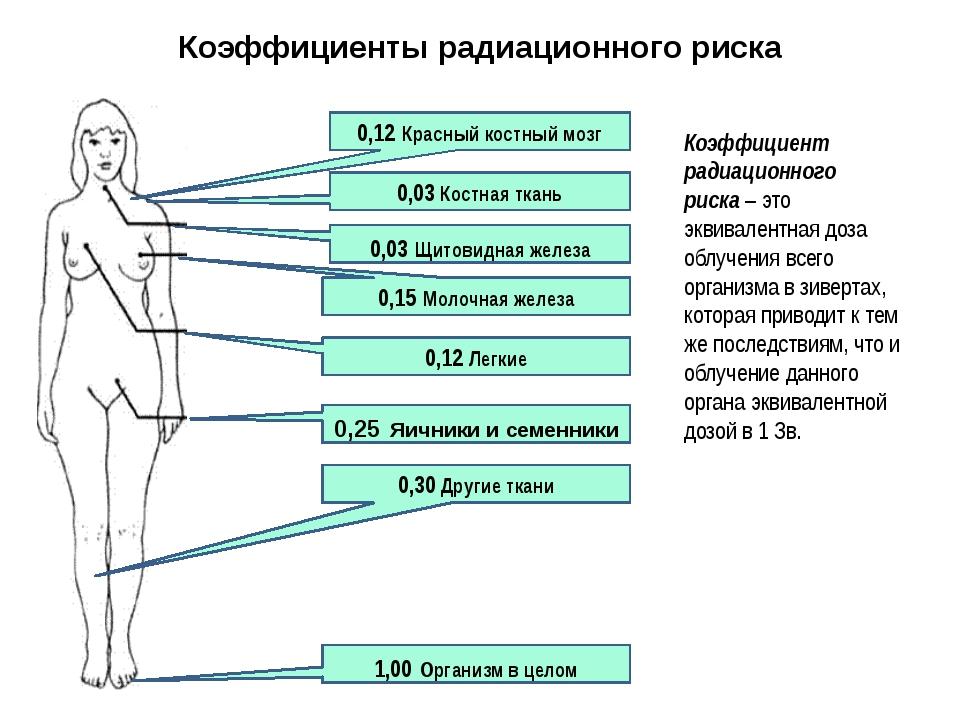 0,12 Красный костный мозг 0,03 Костная ткань 0,03 Щитовидная железа 0,15 Моло...
