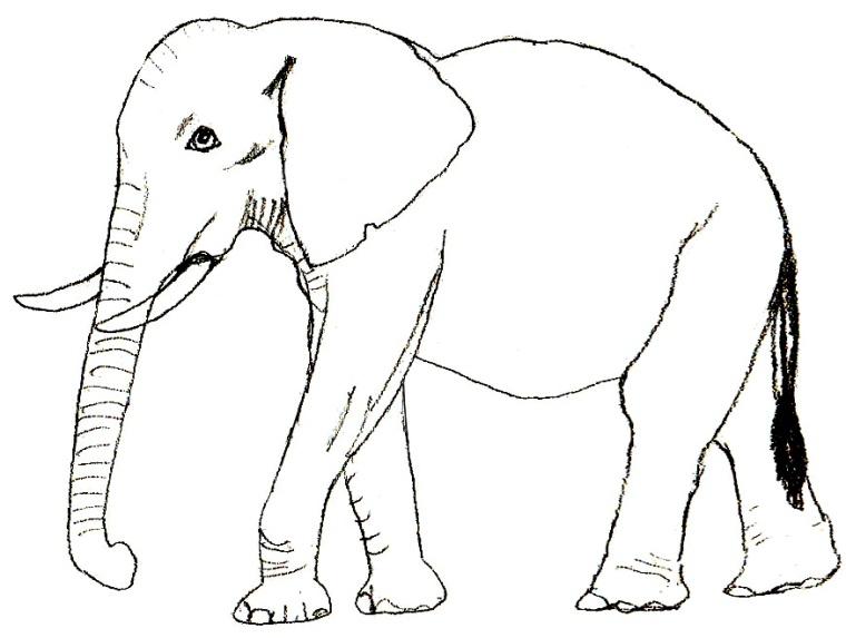 http://www.lookmi.ru/raskraski/elephant.jpg