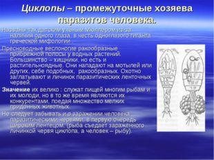 Циклопы – промежуточные хозяева паразитов человека. Названы так датским учёны
