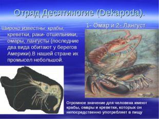 Отряд Десятиногие (Dekapoda). Широко известны: крабы, креветки, раки- отшельн
