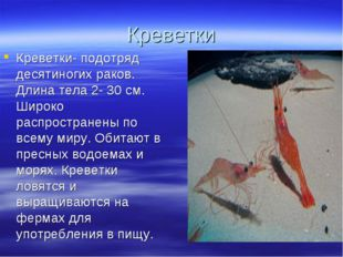 Креветки Креветки- подотряд десятиногих раков. Длина тела 2- 30 см. Широко ра