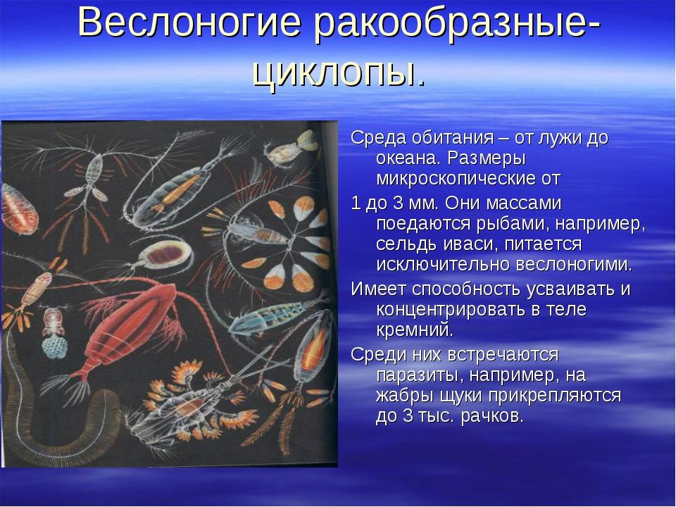 Веслоногие ракообразные- циклопы. Среда обитания – от лужи до океана. Размеры...
