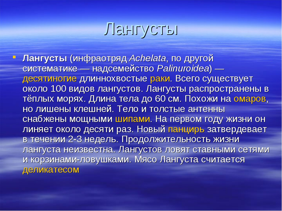 Лангусты Лангусты (инфраотряд Achelata, по другой систематике — надсемейство...