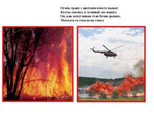 Огонь траву с цветами вместе выжег  Кусты спалил, в зеленый лес вошёл.