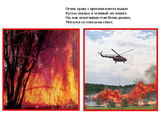 Огонь траву с цветами вместе выжег  Кусты спалил, в зеленый лес вошёл. ...