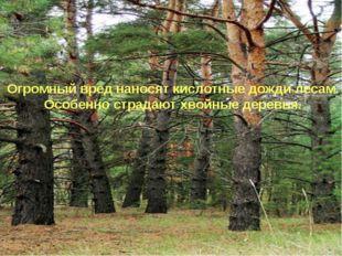 . Огромный вред наносят кислотные дожди лесам. Особенно страдают хвойные дере