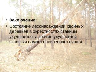 Заключение: Состояние лесонасаждений хвойных деревьев в окрестностях станицы