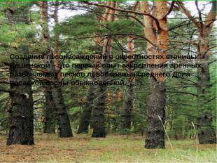 Создание лесонасаждений в окрестностях станицы Вёшенской – это первый опыт за