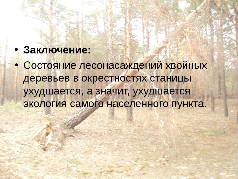 Заключение: Состояние лесонасаждений хвойных деревьев в окрестностях станицы...