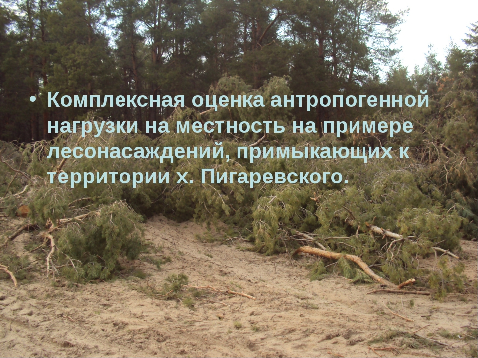 Комплексная оценка антропогенной нагрузки на местность на примере лесонасажде...