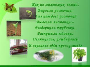 Как из маленьких семян, Выросли росточки, А из каждого росточка Вылезли лист