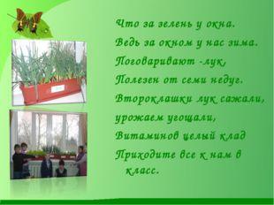 Что за зелень у окна. Ведь за окном у нас зима. Поговаривают -лук, Полезен от