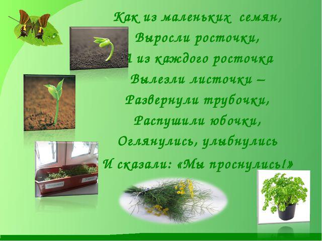 Как из маленьких семян, Выросли росточки, А из каждого росточка Вылезли лист...