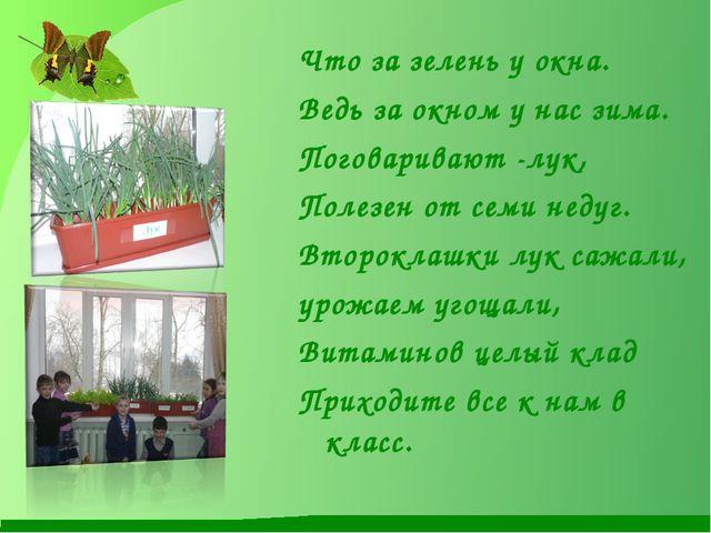 Что за зелень у окна. Ведь за окном у нас зима. Поговаривают -лук, Полезен от...