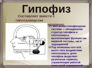 Гипофиз Составляет вместе с гипоталамусом гипоталамо-гипофизарную систему. Ги