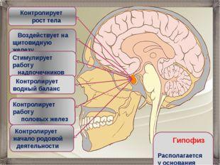 Воздействует на щитовидную железу Контролирует рост тела Стимулирует работу