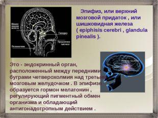 Эпифиз, или верхний мозговой придаток , или шишковидная железа ( epiphisis c