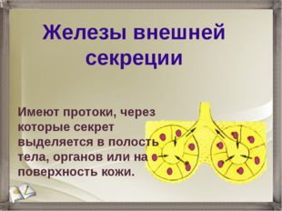 Железы внешней секреции Имеют протоки, через которые секрет выделяется в поло