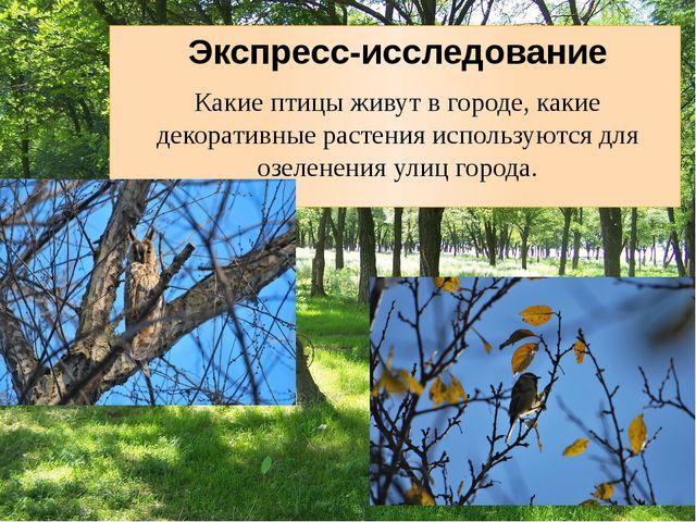 Экспресс-исследование Какие птицы живут в городе, какие декоративные растени...
