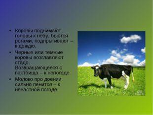 Коровы поднимают головы к небу, бьются рогами, подпрыгивают – к дождю. Черные