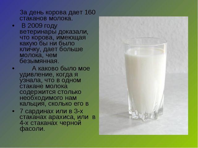 За день корова дает 160 стаканов молока. В 2009 году ветеринары доказали, ч...